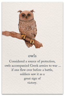 Owls Support Encouragement Card Front