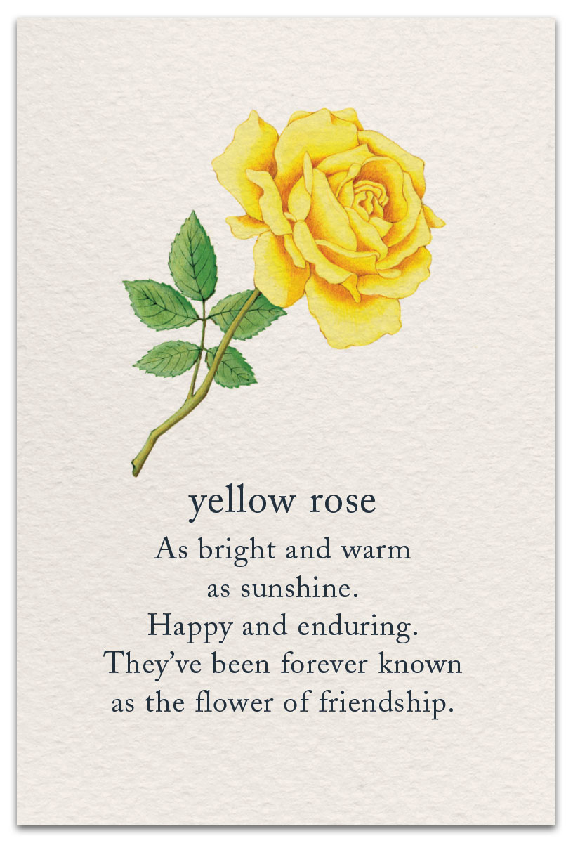 Yellow Rose Birthday Card Cardthartic Com