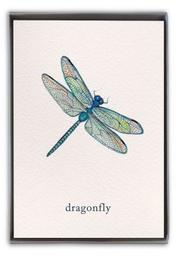 dragonfly boxed notes