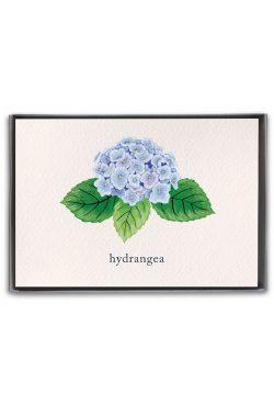 hydrangea boxed notes