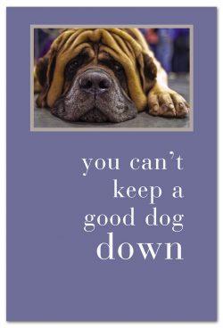 Downward Dog feel better card front