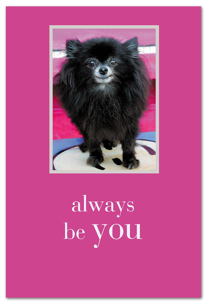 Smiling Black Pomeranian Birthday Card Cardtharticcom