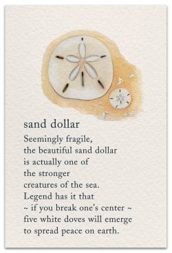 Sand Dollar Birthday Card Front