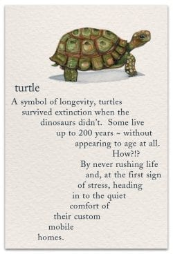 Turtle Birthday Card front
