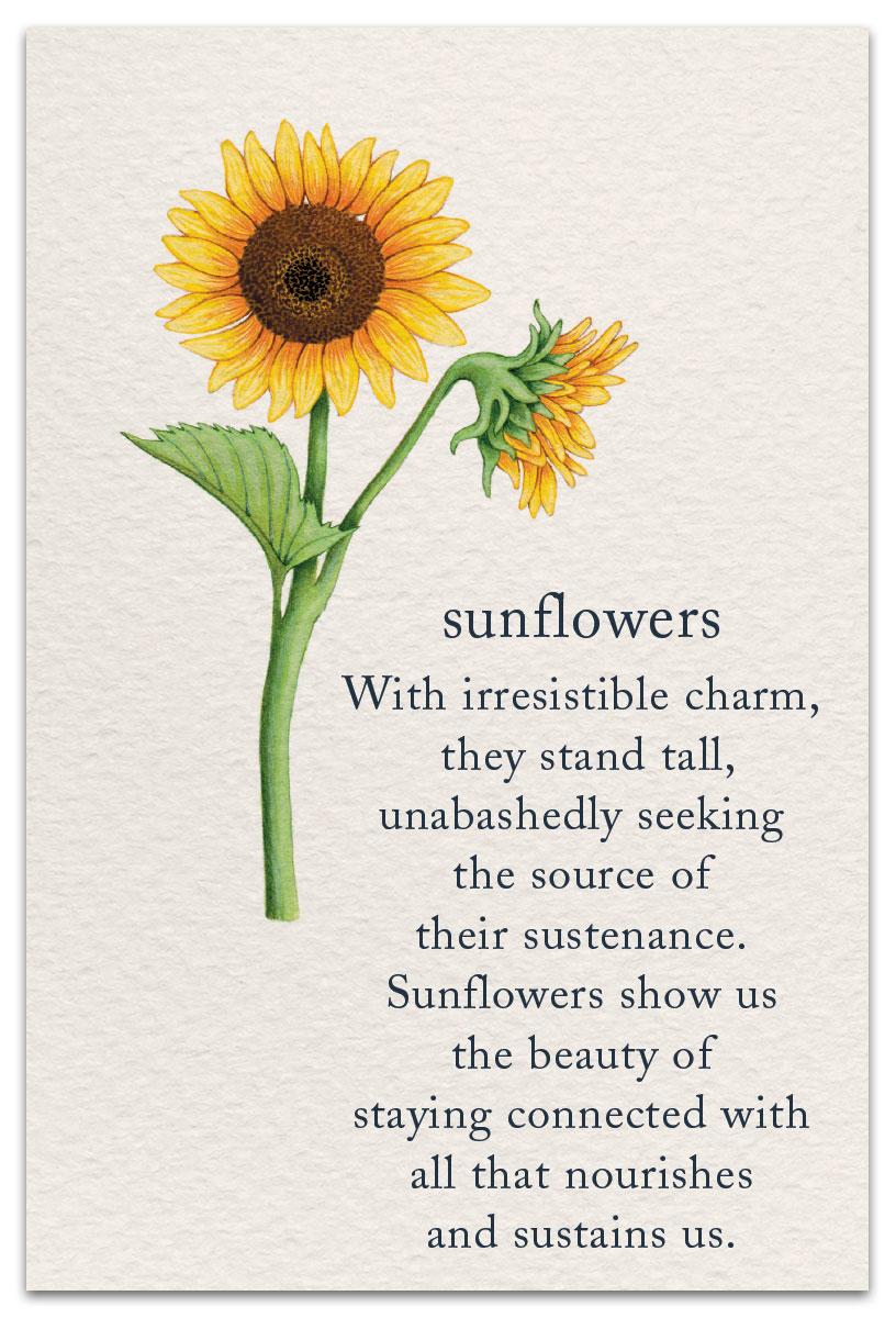 Sunflowers   Birthday Card   cardthartic.com
