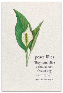 peace lilies condolence card front