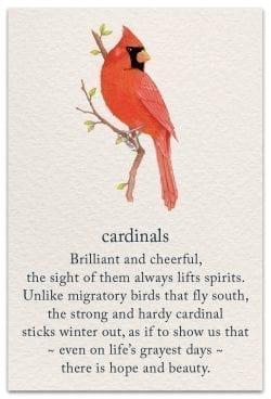 cardinal friendship card front