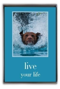 live your life boxed notes