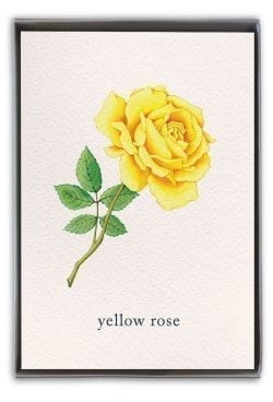 yellow rose boxed notes