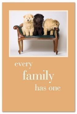 Chow Puppies on Settee Birthday Card front