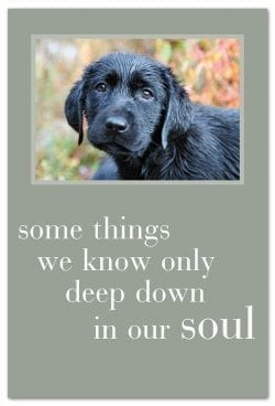 black pup with sad eyes support encouragement Card front
