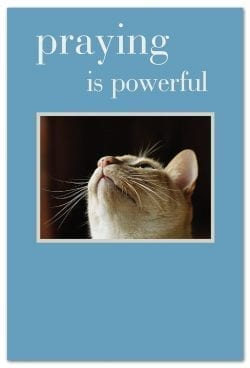 Cat looking up support encouragement card front