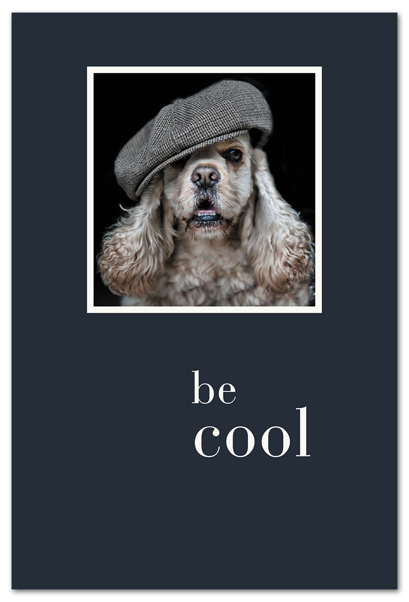 Cool Cocker Spaniel Birthday Card Front