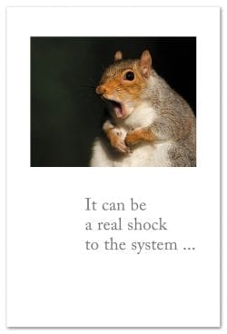 Scared Squirrel